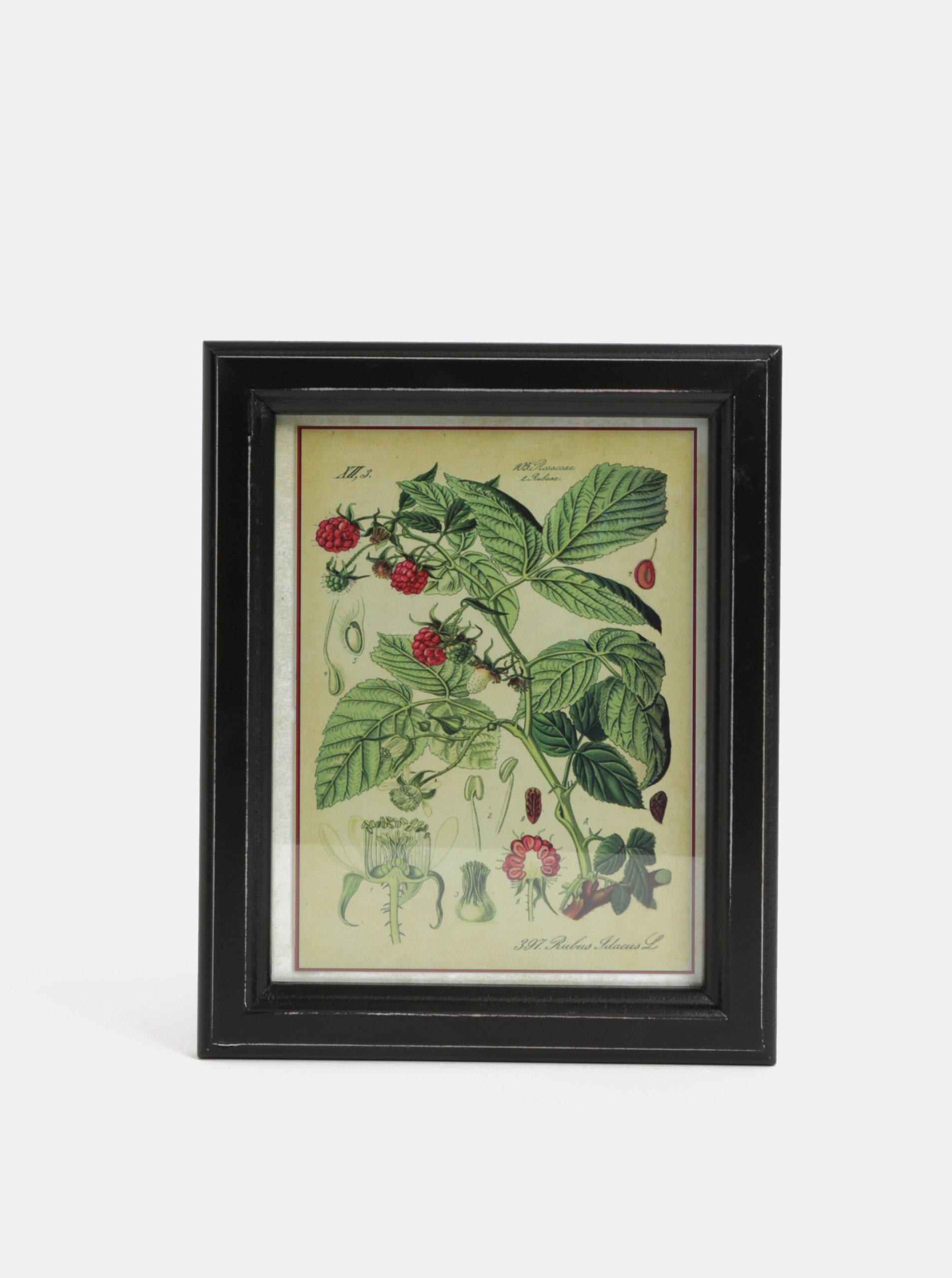 Růžovo-zelený obraz maliny Temerity Jones