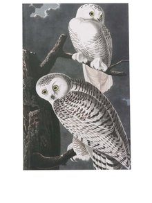 Tmavě šedý zápisník s motivem sovy Magpie Birds
