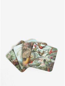 Set de 4 suporturi de pahare cu print Magpie Haeckel