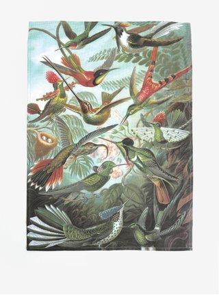 Zelená kuchynská utierka s motívom kolibríkov Magpie Haeckel