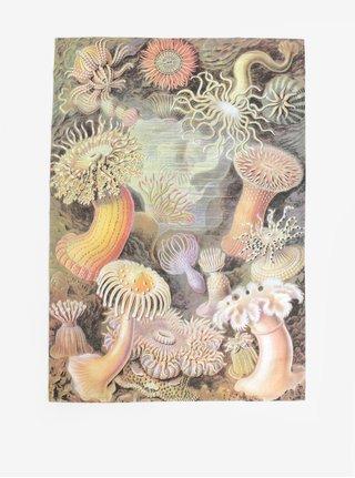 Prospop de bucatarie verde cu motiv acvatic Magpie Haeckel
