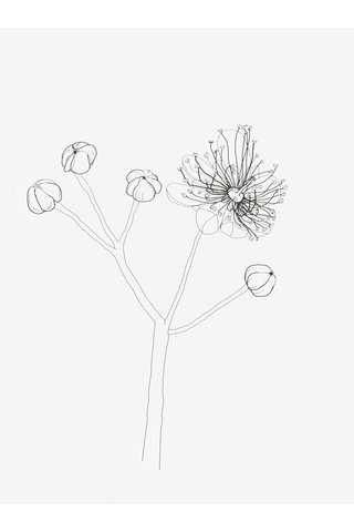 Autorský plakát s motivem květu Lípa A4