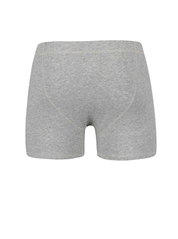 Sivé boxerky Bertoni Bo