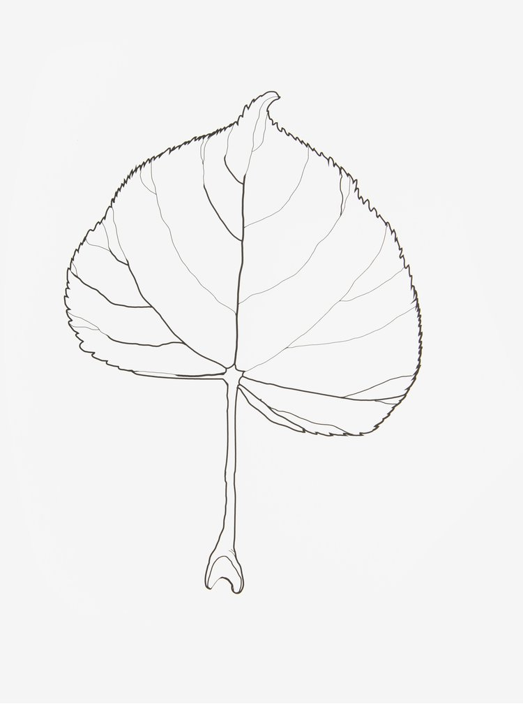Poster cu print frunza  - Lípa A4