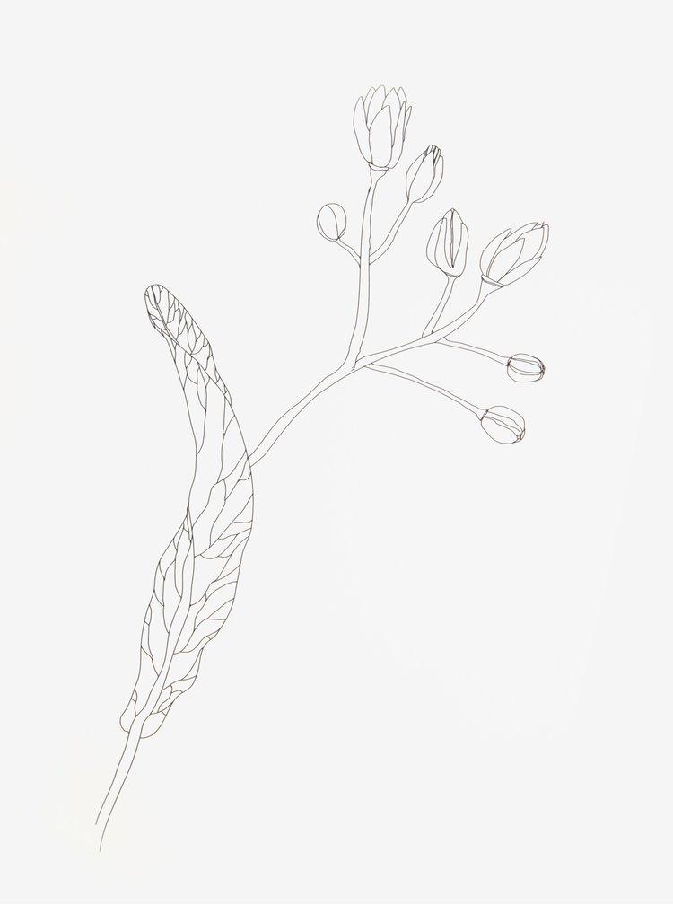 Poster creativ cu print muguri - Lipa A4