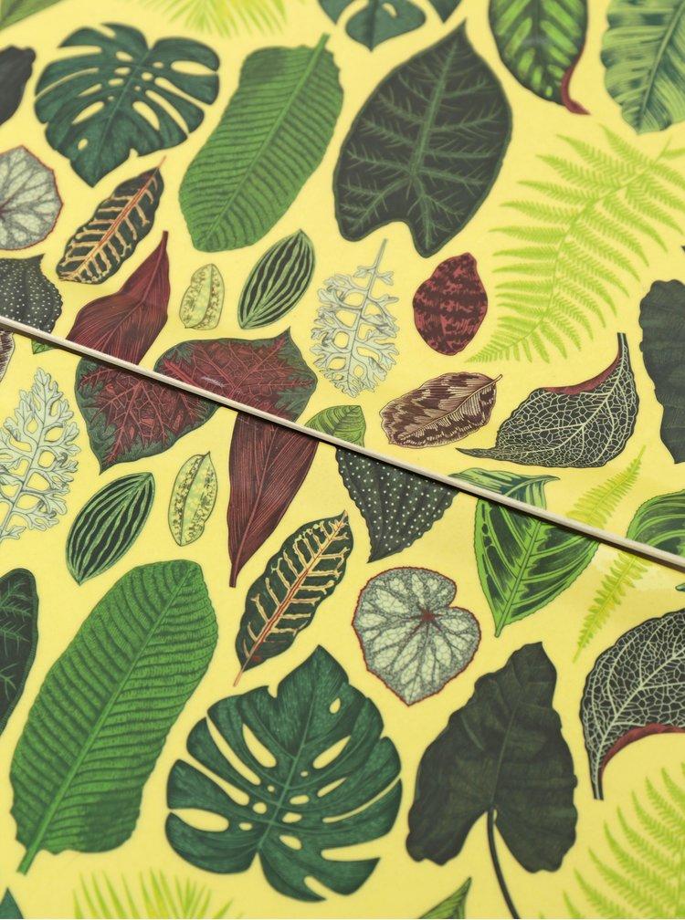 Sada dvou zelených táců Tranquillo Botanical Garden